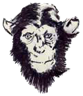 Three Monkeys Online - a curious alternative magazine