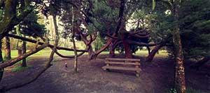 JFK Memorial Park & Arboretum - New Ross, Co. Wexford