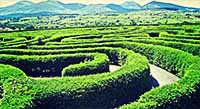 The Peace Maze Co Down